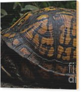 Eastern Box Turtle Wood Print