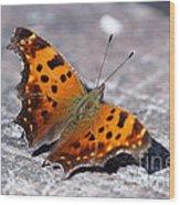 Eastern Comma Butterfly Wood Print