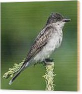 Eastern Kingbird Wood Print