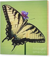 Eastern Tiger Swallowtail Butterfly Square Wood Print