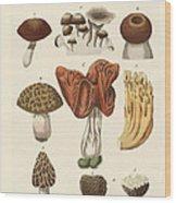 Eatable Mushrooms Wood Print
