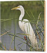 Egret In The Cattails Wood Print