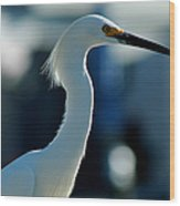 Egret Of Matlacha 2 Wood Print