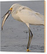 Egret With Fish Wood Print