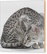 Egyptian Mau Cat Wood Print