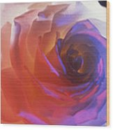 Electric Rose  Wood Print by Etti PALITZ