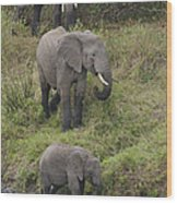 Elephants Wood Print