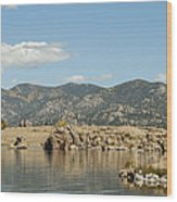 Eleven Mile State Park Wood Print