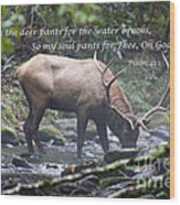 Elk Drinking Water From A Stream Wood Print