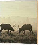 Elks Sparring Yellowstone Np Wyoming Wood Print