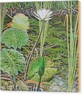 Emerald Lily Pond Wood Print
