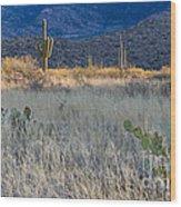 Engelmanns Prickly Pear Cactus Wood Print