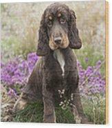 English Cocker Spaniel Puppy Wood Print