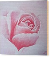 English Rose Wood Print