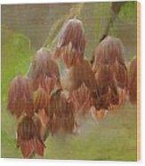 Enkianthus Bells Wood Print