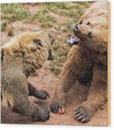 Eurasian Brown Bears Fighting Wood Print