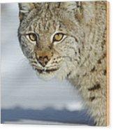 Eurasian Lynx In Snow Wood Print