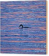 Evening Swim Wood Print