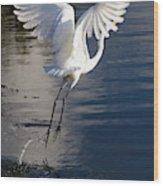 Everglades Wood Print