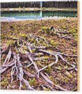 Exposed Wood Print