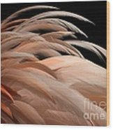 Fabulous Feathers Wood Print