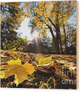 Fall Autumn Park. Falling Leaves Wood Print