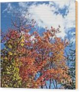 Fall Colors And Blue Sky Wood Print