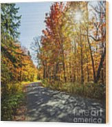 Fall Forest Road Wood Print