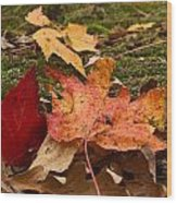 Fall Moss Carpet Wood Print