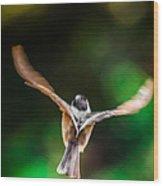 Fast Flight Wood Print