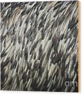 Feather Texture Wood Print