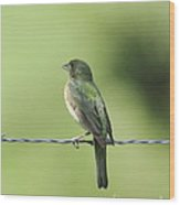 Female Painted Bunting Wood Print