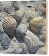 Fernandina Shells  Wood Print