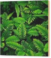 Ferns Wood Print