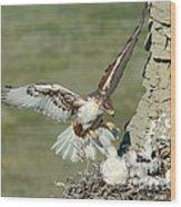 Ferruginous Hawk And Chicks Wood Print