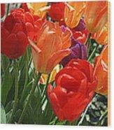 Festival Of Tulips Wood Print