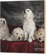 Festive Puppies Wood Print