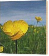 Field Of Buttercups Wood Print