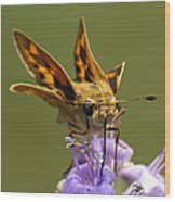 Fiery Skipper Butterfly Wood Print