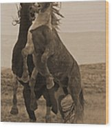 Fighting Wild Stallions Wood Print