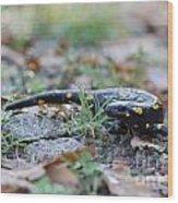 Fire Salamander Fog Droplets Wood Print