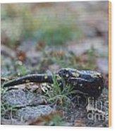 Fire Salamander Wood Print