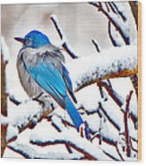 First December Snow Wood Print