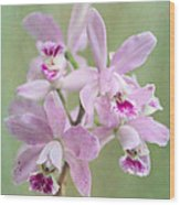 Five Beautiful Pink Orchids Wood Print