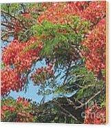 Flamboyants - Ile De La Reunion - Reunion Island Wood Print by Francoise Leandre