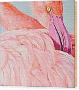 Female Flamingo In The Bahamas Wood Print