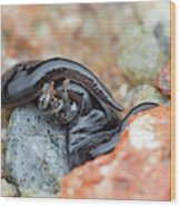 Flatworm With Prey Wood Print