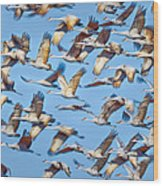 Flight Of The Sandhill Cranes Wood Print by Steven Llorca