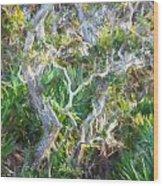 Florida Scrub Oaks Painted  Wood Print