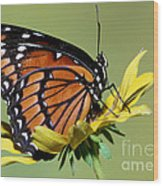 Florida Viceroy Wood Print